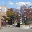 高陽の街路樹