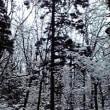 雪の遊歩道を行く