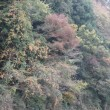 2018/11/11〜13 水戸fonto泉 竹伐採保全