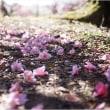 春ですね ♪