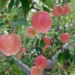17/10/4 リンゴを買いに(弘前と青森とは違う)