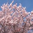 梅が咲いた