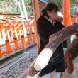 295 アチャコの京都観光日誌  伏見稲荷大社  千本鳥居を建立する?