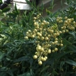 中新井地区の秋花