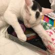 猫と家計簿