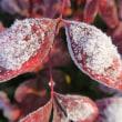 冬期の写真ー29