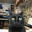黒猫ジジィの日曜日、暇なのですが・・・