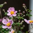 24/Sep カワセミと季節の花