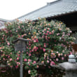 Kyoto Jizoin Tsubakiji temple