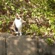 ネコ日和だった梅まつりと陶器市