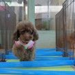 3/18(日)の【ALOHA塾】は未病ケアの《愛犬と一緒にピコピコday》♫ 犬のしつけ教室@アロハドギー