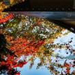 秋のエゾリスと玉泉館跡地公園が紅葉してきました