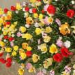 4月の風景(小学一年生の様な花?)