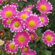 日本の秋を飾る花