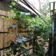 夏、ゴーヤが茂っていた庭、今はがらんとして物悲しい
