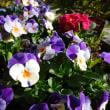 ある早春の日(4)