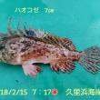 笑転爺の釣行記 2月15日☁ 久里浜海岸