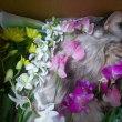 愛猫クーが永眠しました