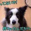 白いって… 良いことだぁ~(o^∇^o)ノ