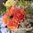 添え花はアルケミラロブスタ )^o^(