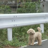 台風21号、北海道地震で被害を受けられた方々に謹んでお見舞い申し上げます😢