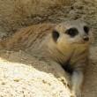 暑い中ミニ動物園へ行く