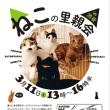 ねこの里親会 in 渋谷 が・3月11日 土曜日に開かれます(^^)