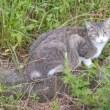 😸夜明け猫…多摩川猫シリーズ