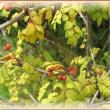 果樹とメダカ