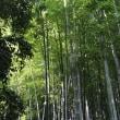 泰山木(たいさんぼく)