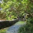 醒ヶ井・地蔵川の今 P3