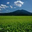 筑波山遠景~明野の蕎麦畑