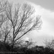 モノクロで公園スナップ その2 木の枝と空