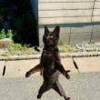 ふわぁ〜っと浮遊する黒ネコ @相島のネコたち
