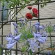 雨は小止みに。庭においでよ、と花の声が、、、。