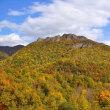 「ハ剣山」の黄葉を撮りました !