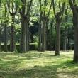 ハンカチの木・・・☆