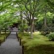 御所と青もみじの京都 Ⅱ