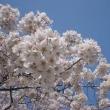 春の訪れ ~happy tune~