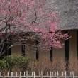 春の息吹き ~ まもなく桜の出番・・・