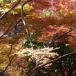 平林寺の紅葉2017.12.3