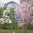 2018.03.20 千代田区 三崎町2: ビルの谷間の春景色