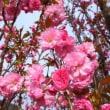 春の嵐が去りました~!今日から晴天♪♪