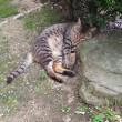 猫の寅さん