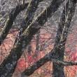 17年10月~11月~秋~開田高原~野鳥