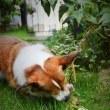 お庭遊び、しおりをパパラッチ!