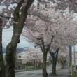 晴耕雨読日記 平成30年4月26日 木曜日 桜満開