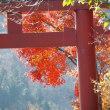 晩秋ハイキング、御岳山から日の出山2