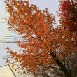 最高気温14℃の福岡です。
