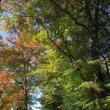 三島は「楽寿園」の豆列車と紅葉・・(2017年11月)